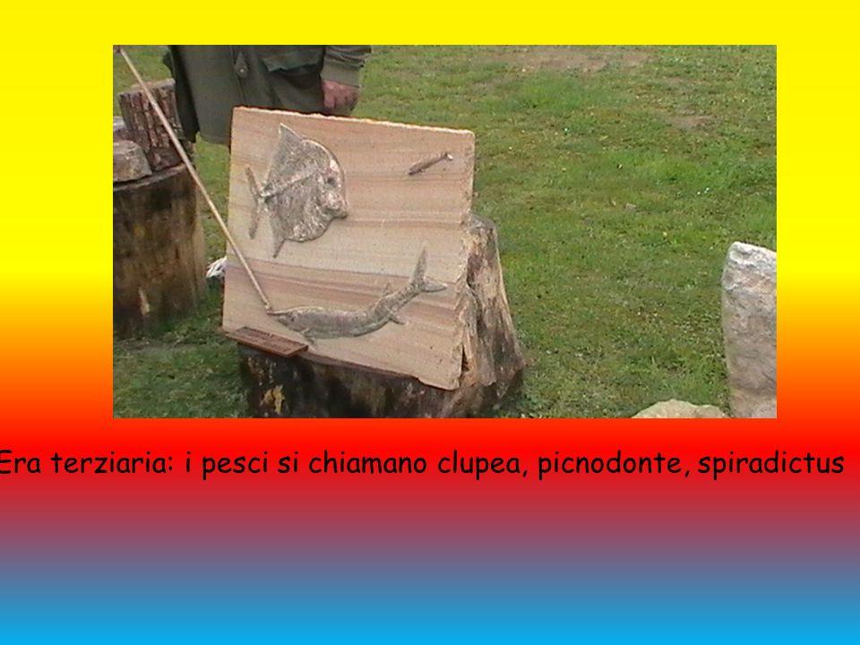 Era terziaria: i pesci si chiamano clupea, picnodonte, spiradictus