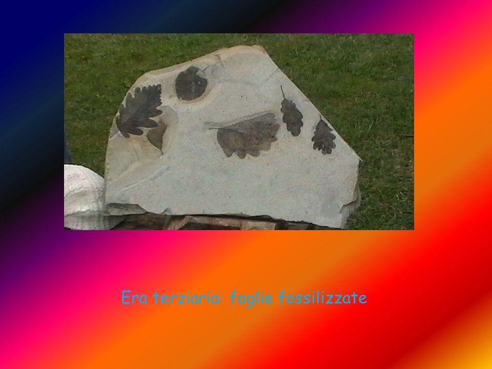 Era terziaria: foglie fossilizzate