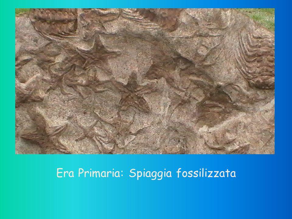 Era Primaria: Spiaggia fossilizzata