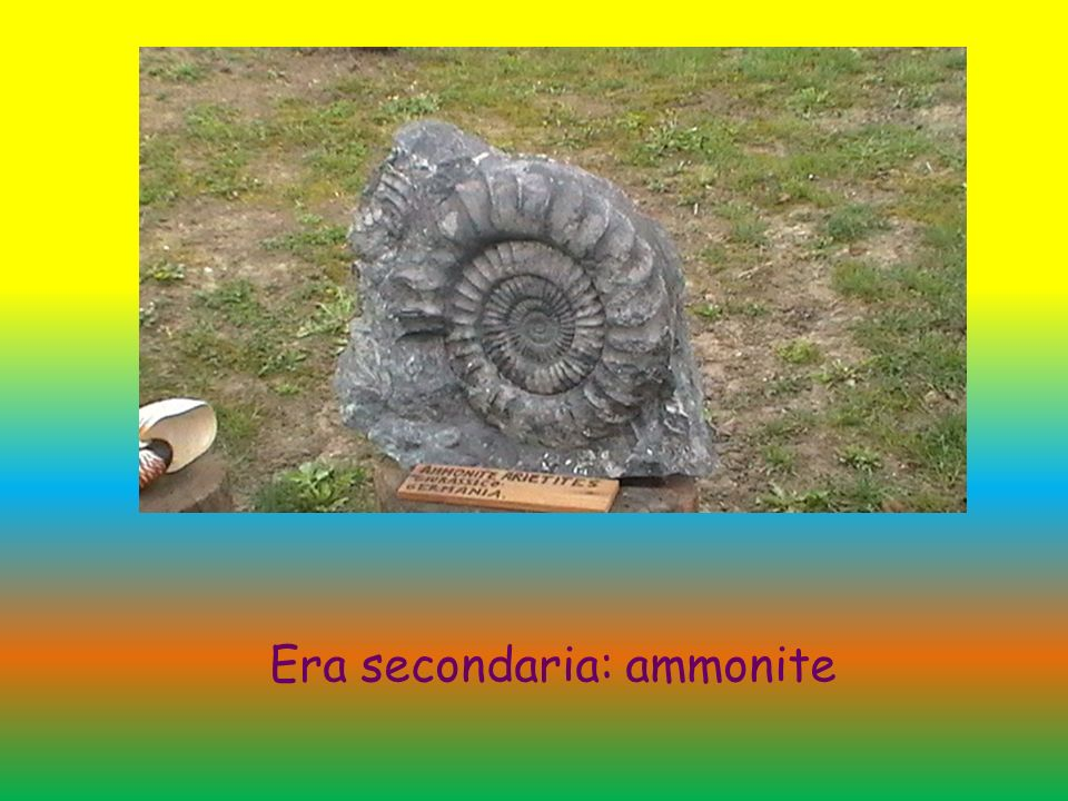 Era secondaria: ammonite