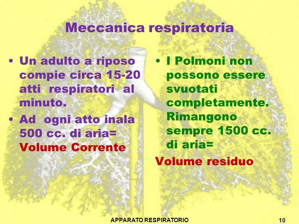 Meccanica respiratoria Un adulto a riposo compie circa 15-20 atti respiratori al minuto. Ad ogni atto inala 500 cc. di aria= Volume Corrente I Polmoni
