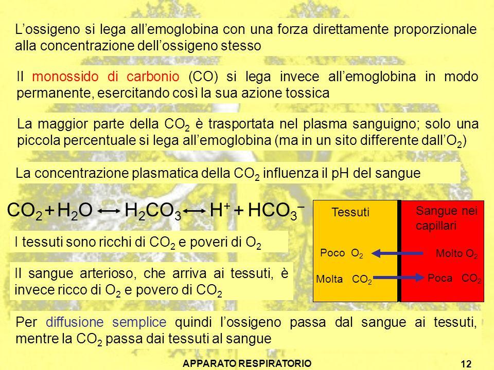 APPARATO RESPIRATORIO 12 Lossigeno si lega allemoglobina con una forza direttamente proporzionale alla concentrazione dellossigeno stesso Il monossido