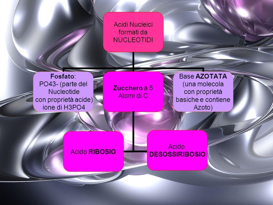 Acido RIBOSIO Acido DESOSSIRIBOSIO Acidi Nucleici (differente base Azotata) Monosaccaride 5 atomi di C 1 atomo in meno del ribosio Acido RIBONUCLEICO RNA Acido DESOSSIRIBONUCLEICO DNA
