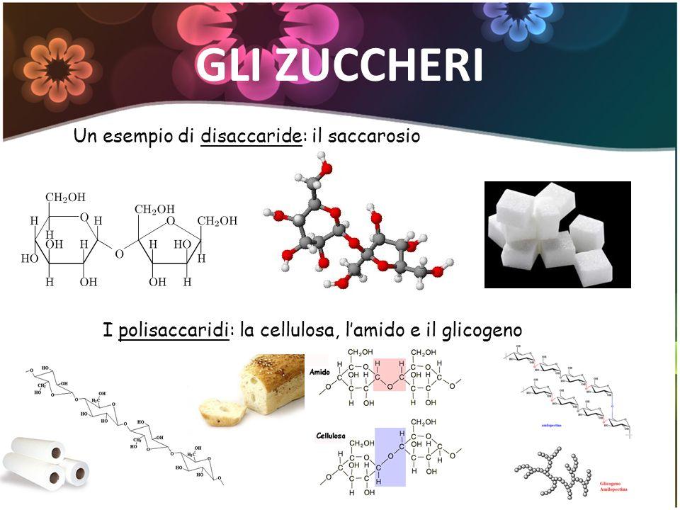 GLI ZUCCHERI Un esempio di disaccaride: il saccarosio I polisaccaridi: la cellulosa, lamido e il glicogeno