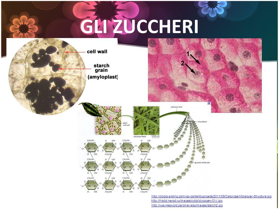 GLI ZUCCHERI http://waynesword.palomar.edu/images/starch2.jpg http://histol.narod.ru/images/cytol/glycogen-01-l.jpg http://doors-sliding.com/wp-conten