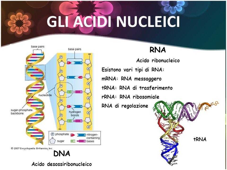GLI ACIDI NUCLEICI DNA Acido desossiribonucleico RNA Acido ribonucleico Esistono vari tipi di RNA: mRNA: RNA messaggero tRNA: RNA di trasferimento rRN