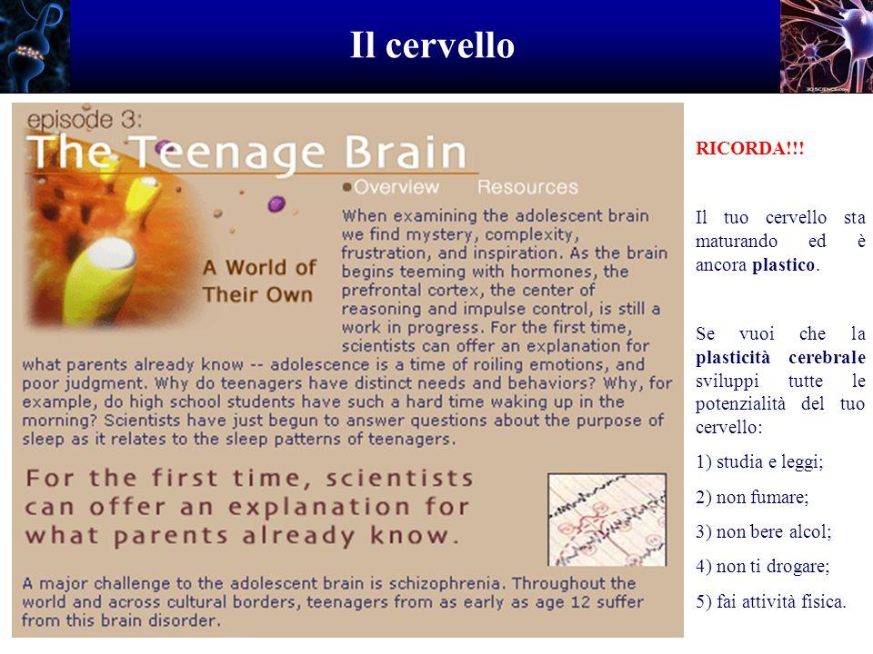 Il cervello RICORDA!!! Il tuo cervello sta maturando ed è ancora plastico. Se vuoi che la plasticità cerebrale sviluppi tutte le potenzialità del tuo