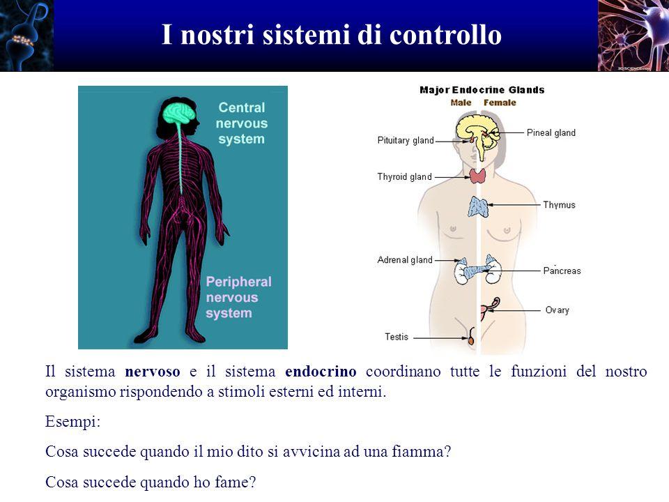 I nostri sistemi di controllo Il sistema nervoso e il sistema endocrino coordinano tutte le funzioni del nostro organismo rispondendo a stimoli estern
