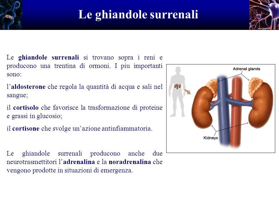 Le ghiandole surrenali Le ghiandole surrenali si trovano sopra i reni e producono una trentina di ormoni. I piu importanti sono: laldosterone che rego