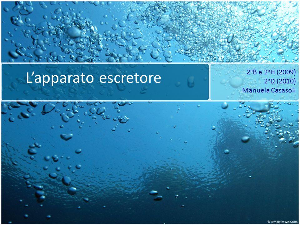 Lapparato escretore 2 a B e 2 a H (2009) 2 a D (2010) Manuela Casasoli
