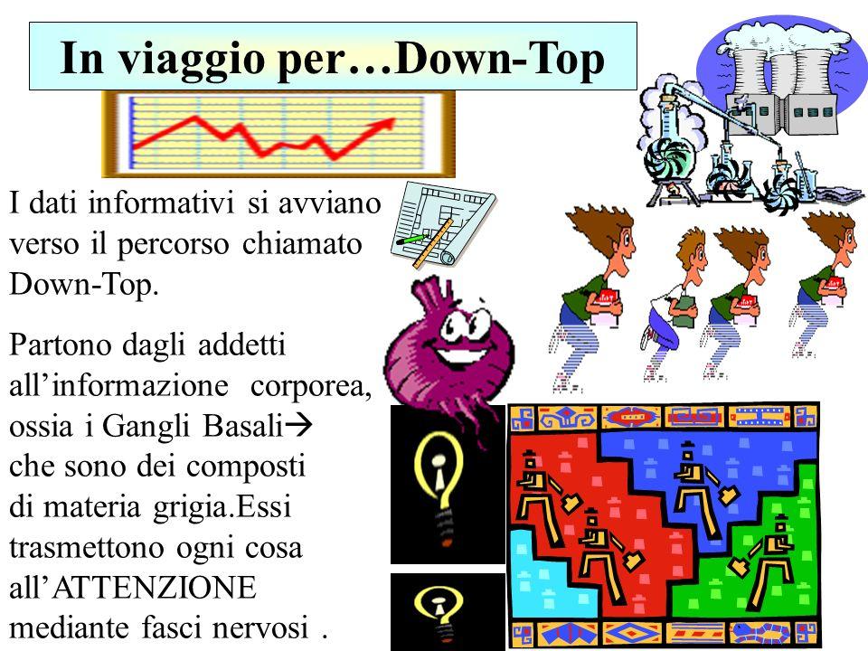 I dati informativi si avviano verso il percorso chiamato Down-Top. Partono dagli addetti allinformazione corporea, ossia i Gangli Basali che sono dei