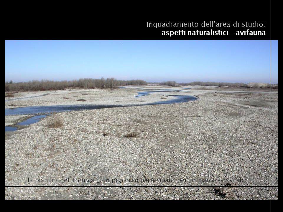 la pianura del Trebbia _ un percorso partecipato per un parco possibile Inquadramento dellarea di studio: aspetti naturalistici - avifauna