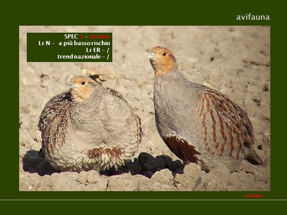 starna avifauna SPEC 3 - declino Lr N - a più basso rischio Lr ER - / trend nazionale - /