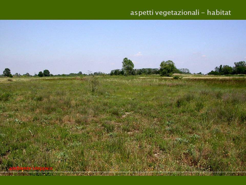 aspetti vegetazionali - habitat ambiente steppico