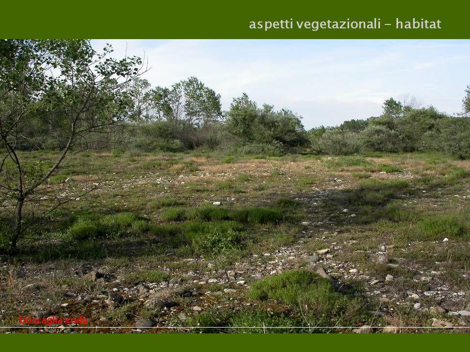 aspetti vegetazionali - habitat saliceto, ontaneto umido