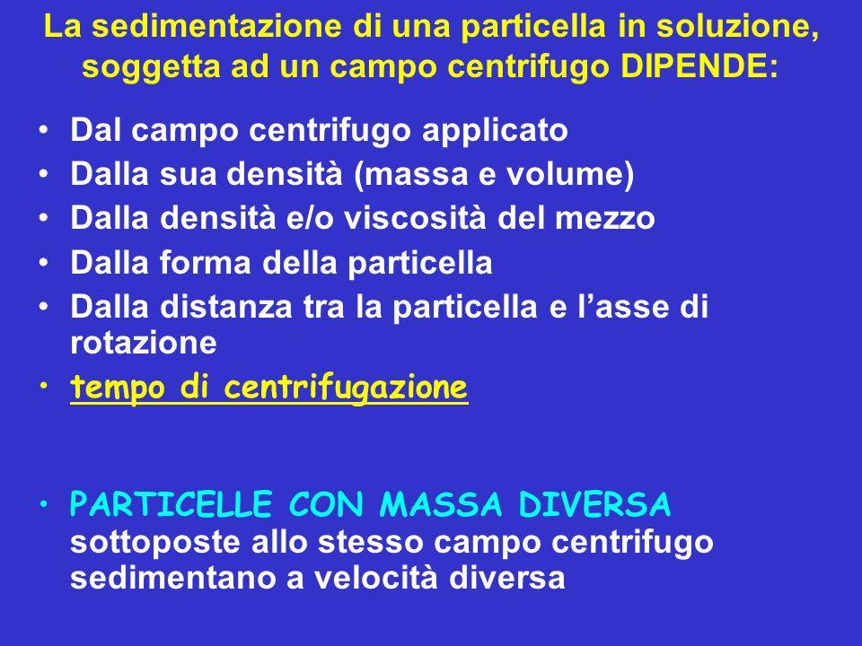 La sedimentazione di una particella in soluzione, soggetta ad un campo centrifugo DIPENDE: Dal campo centrifugo applicato Dalla sua densità (massa e v