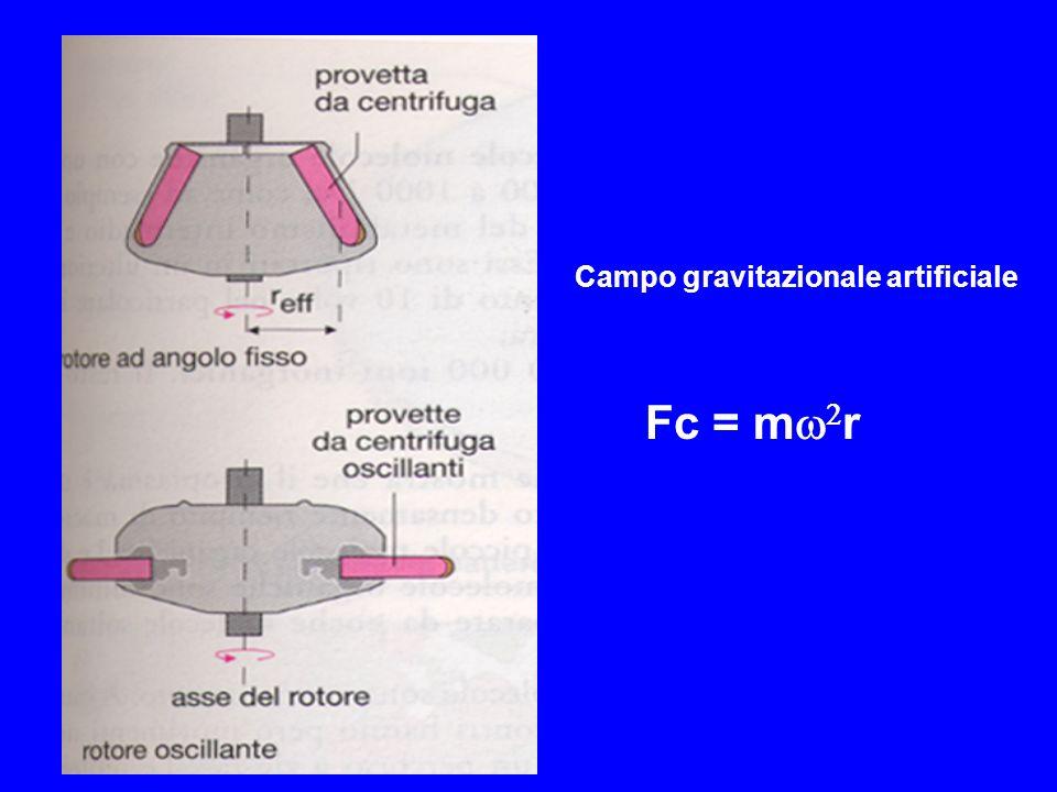 m = massa (peso della particella in grammi) = velocità angolare del rotore (rad/sec) r = distanza dallasse di rotazione (cm) F g = mg F g = Forza di gravità g = accellerazione della forza di gravità pari a 980 cm x sec -2