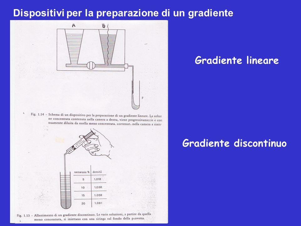 Gradiente lineare Gradiente discontinuo Dispositivi per la preparazione di un gradiente