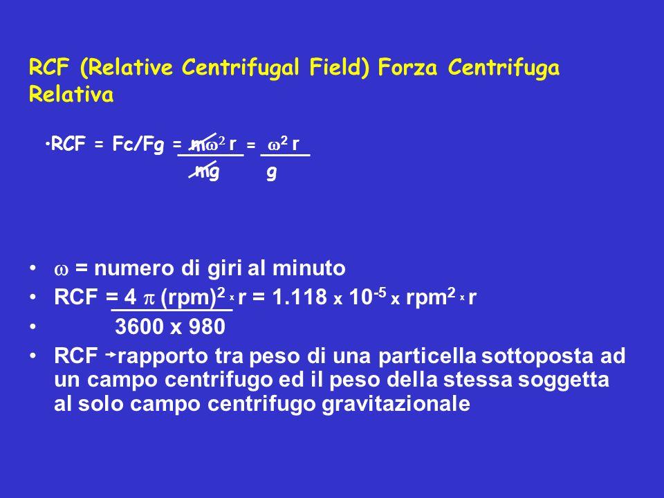 RCF (Relative Centrifugal Field) Forza Centrifuga Relativa = numero di giri al minuto RCF = 4 (rpm) 2 x r = 1.118 x 10 -5 x rpm 2 x r 3600 x 980 RCF r