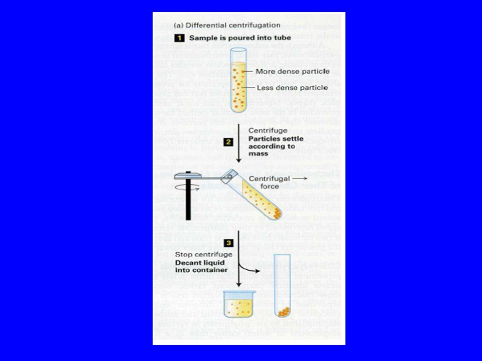 RCF (Relative Centrifugal Field) Forza Centrifuga Relativa RCF: rapporto tra peso di una particella sottoposta ad un campo centrifugo ed il peso della stessa soggetta al solo campo centrifugo gravitazionale