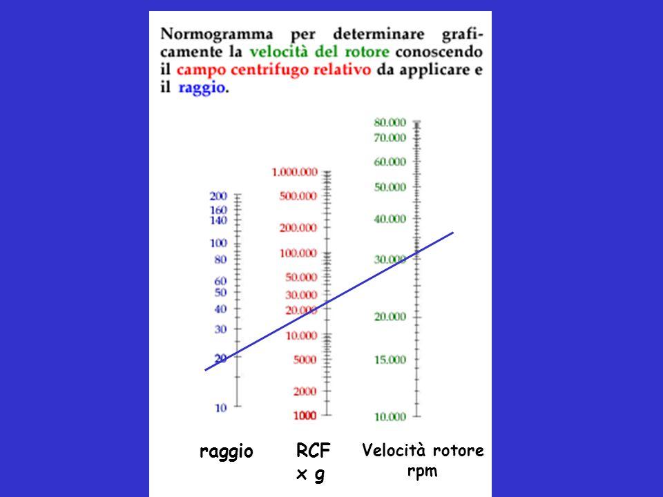 CENTRIFUGAZIONE IN GRADIENTE DI DENSITA Sfrutta differenze di: dimensioni forma densità