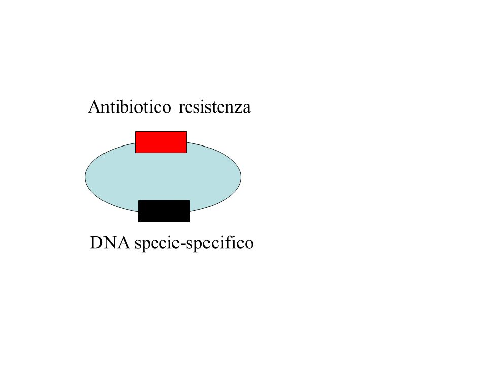 Antibiotico resistenza DNA specie-specifico