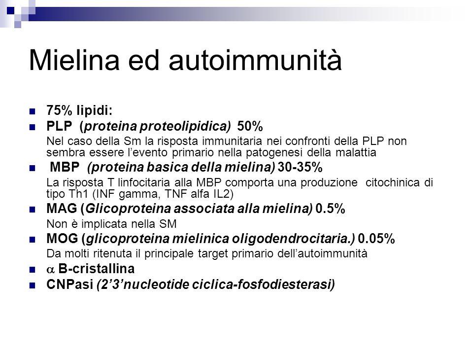 Mielina ed autoimmunità 75% lipidi: PLP (proteina proteolipidica) 50% Nel caso della Sm la risposta immunitaria nei confronti della PLP non sembra ess