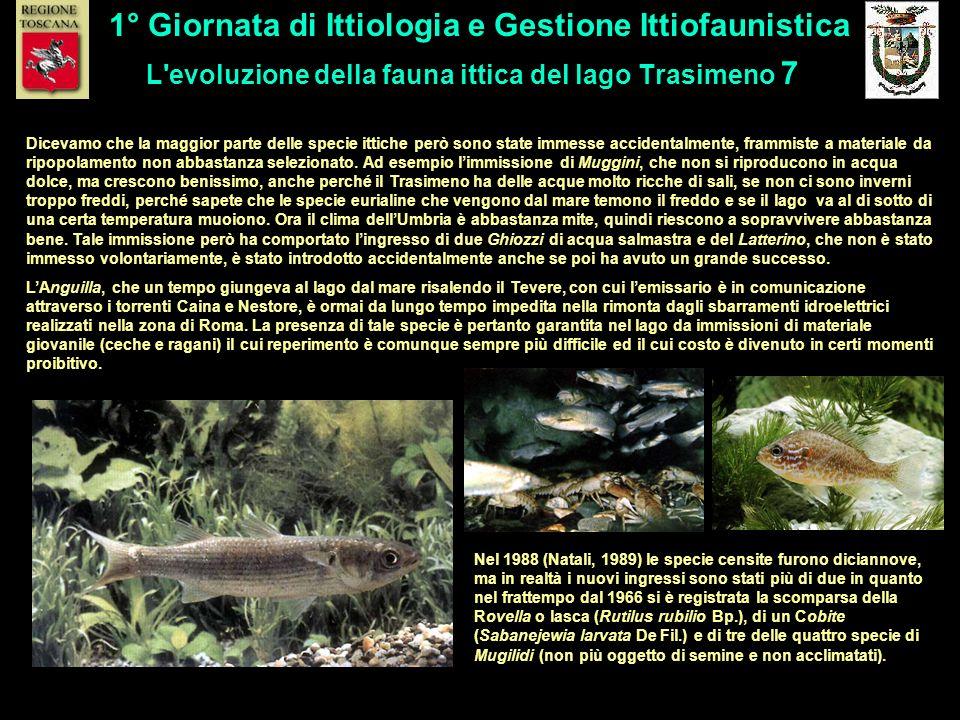L'evoluzione della fauna ittica del lago Trasimeno 7 1° Giornata di Ittiologia e Gestione Ittiofaunistica Dicevamo che la maggior parte delle specie i