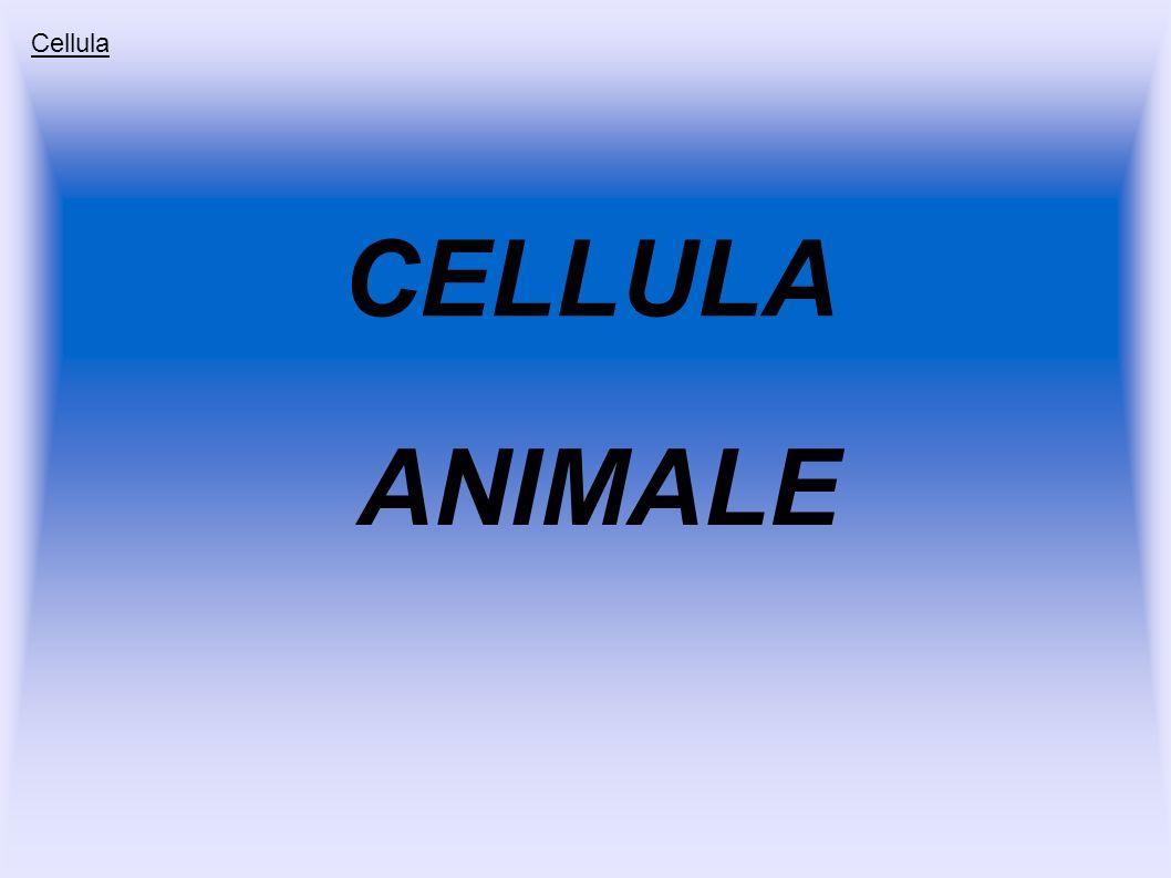 CELLULA ANIMALE Cellula