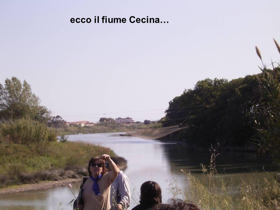 ecco il fiume Cecina…