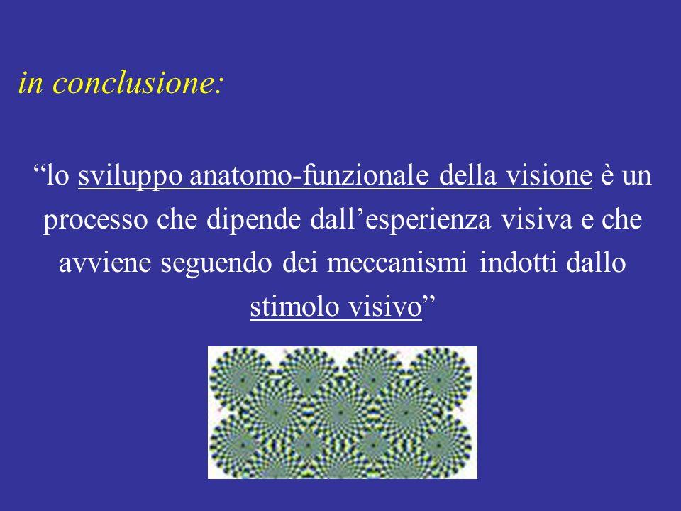 in conclusione: lo sviluppo anatomo-funzionale della visione è un processo che dipende dallesperienza visiva e che avviene seguendo dei meccanismi indotti dallo stimolo visivo