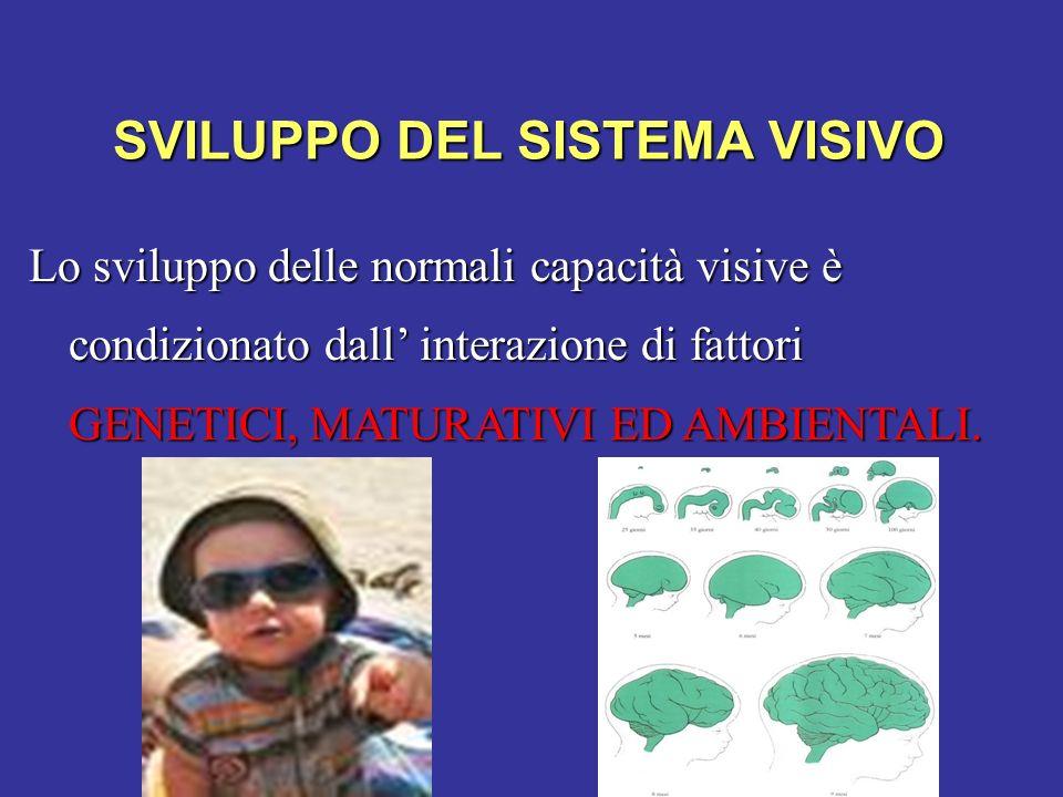 SVILUPPO DEL SISTEMA VISIVO Lo sviluppo delle normali capacità visive è condizionato dall interazione di fattori GENETICI, MATURATIVI ED AMBIENTALI.