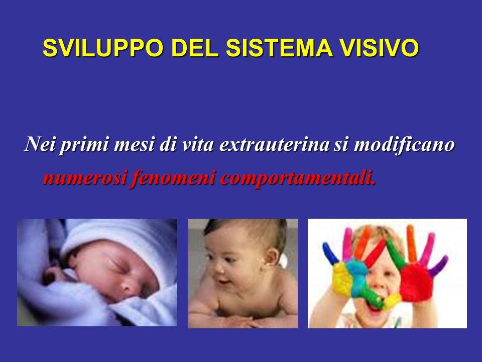 SVILUPPO DEL SISTEMA VISIVO Nei primi mesi di vita extrauterina si modificano numerosi fenomeni comportamentali.
