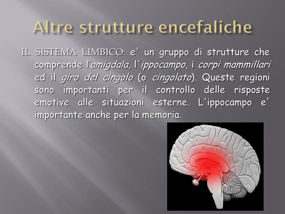 IL SISTEMA LIMBICO: e' un gruppo di strutture che comprende lamigdala, l'ippocampo, i corpi mammillari ed il giro del cingolo (o cingolato). Queste re