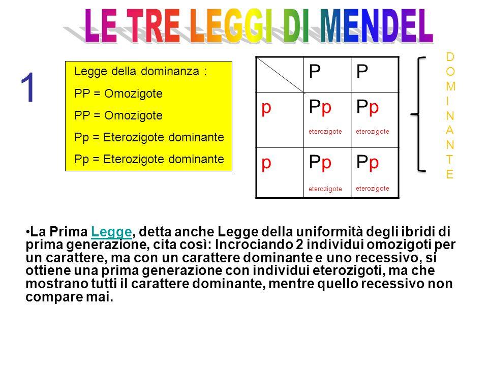 1 Legge della dominanza : PP = Omozigote Pp = Eterozigote dominante PP pPp eterozigote Pp eterozigote pPp eterozigote Pp eterozigote La Prima Legge, d