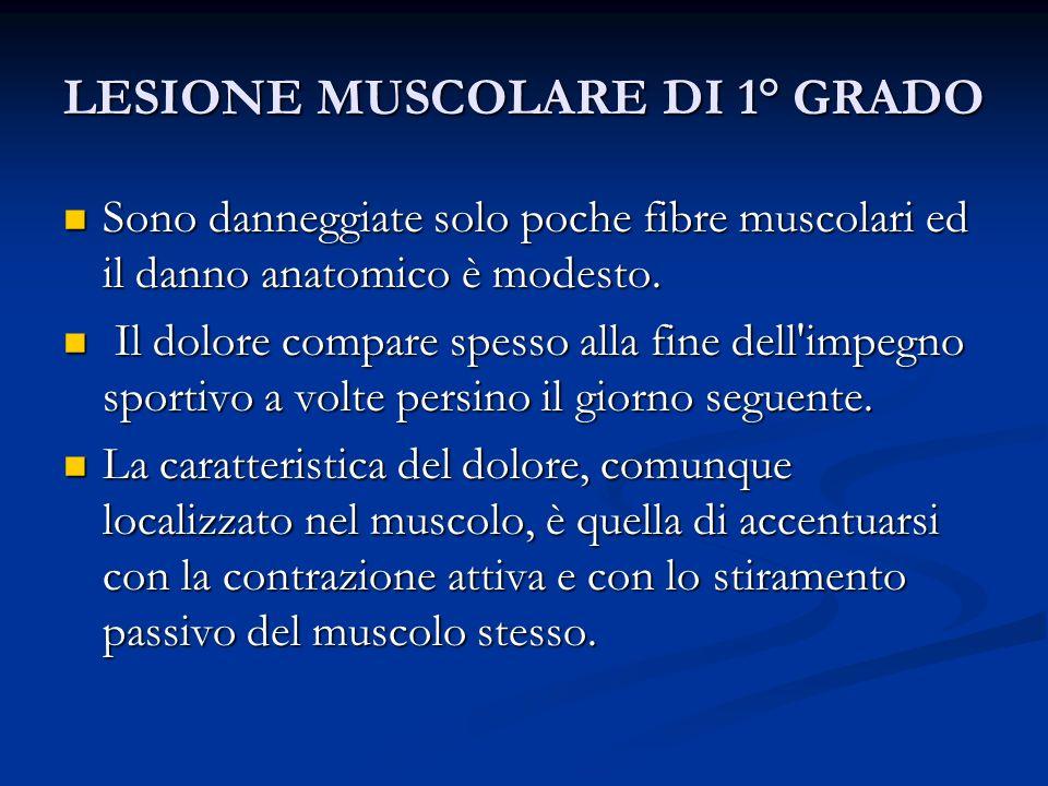 LESIONE MUSCOLARE DI 1° GRADO Sono danneggiate solo poche fibre muscolari ed il danno anatomico è modesto. Sono danneggiate solo poche fibre muscolari