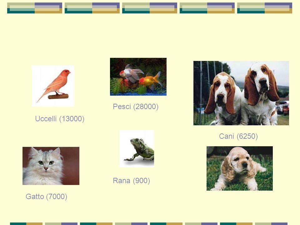 Uccelli (13000) Pesci (28000) Cani (6250) Gatto (7000) Rana (900)