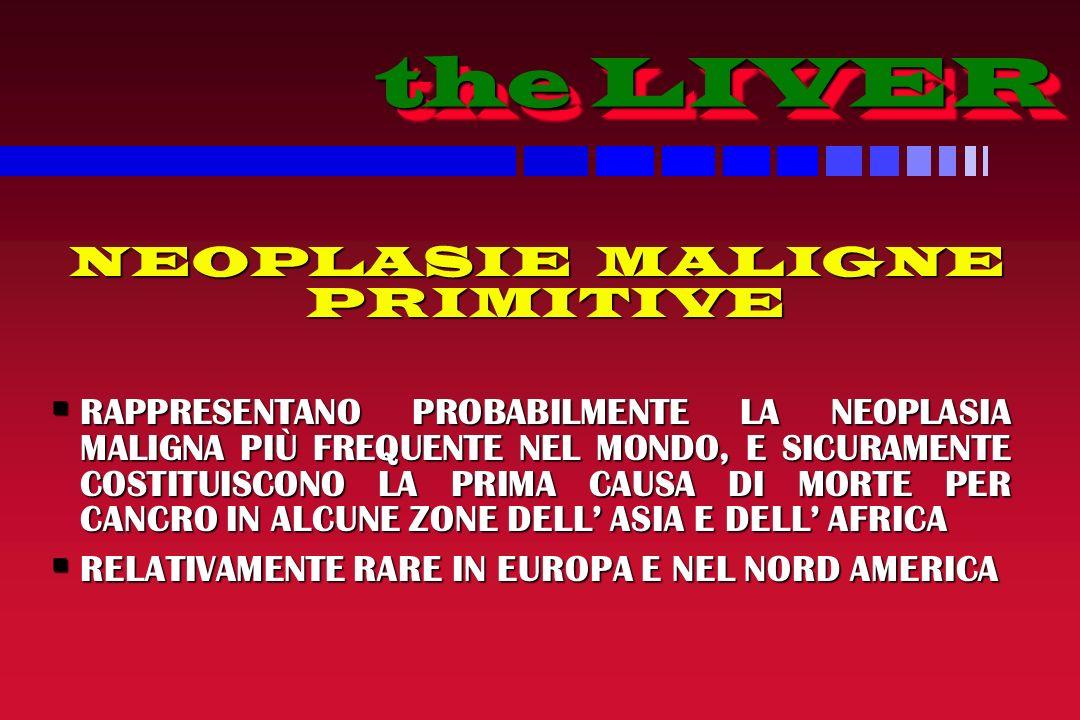 the LIVER the LIVER NEOPLASIE MALIGNE PRIMITIVE NEOPLASIE MALIGNE PRIMITIVE RAPPRESENTANO PROBABILMENTE LA NEOPLASIA MALIGNA PIÙ FREQUENTE NEL MONDO, E SICURAMENTE COSTITUISCONO LA PRIMA CAUSA DI MORTE PER CANCRO IN ALCUNE ZONE DELL ASIA E DELL AFRICA RAPPRESENTANO PROBABILMENTE LA NEOPLASIA MALIGNA PIÙ FREQUENTE NEL MONDO, E SICURAMENTE COSTITUISCONO LA PRIMA CAUSA DI MORTE PER CANCRO IN ALCUNE ZONE DELL ASIA E DELL AFRICA RELATIVAMENTE RARE IN EUROPA E NEL NORD AMERICA RELATIVAMENTE RARE IN EUROPA E NEL NORD AMERICA