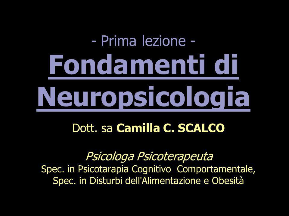 - Prima lezione - Fondamenti di Neuropsicologia Dott. sa Camilla C. SCALCO Psicologa Psicoterapeuta Spec. in Psicotarapia Cognitivo Comportamentale, S