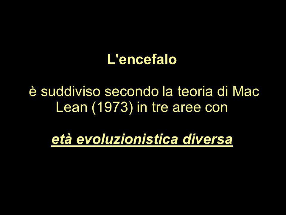 L'encefalo è suddiviso secondo la teoria di Mac Lean (1973) in tre aree con età evoluzionistica diversa