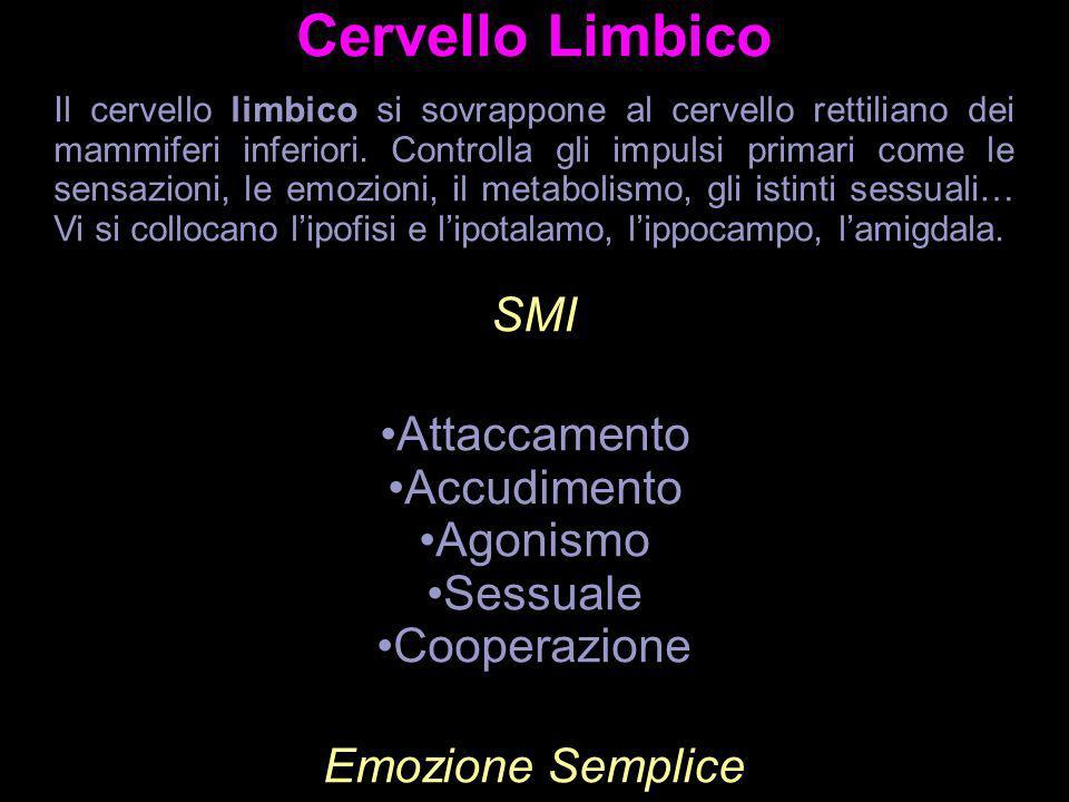 Cervello Limbico Il cervello limbico si sovrappone al cervello rettiliano dei mammiferi inferiori. Controlla gli impulsi primari come le sensazioni, l