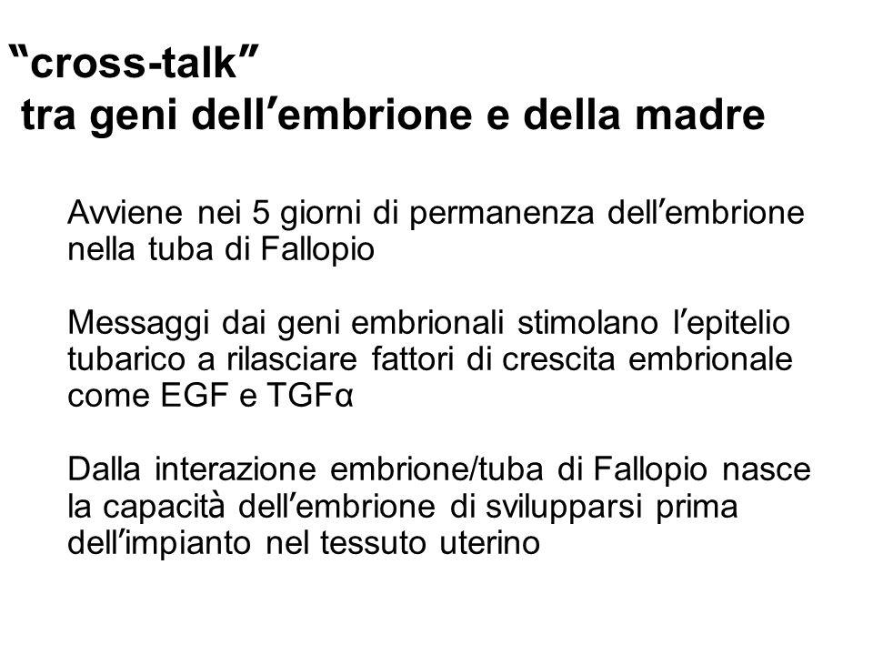 cross-talk tra geni dell embrione e della madre Avviene nei 5 giorni di permanenza dell embrione nella tuba di Fallopio Messaggi dai geni embrionali stimolano l epitelio tubarico a rilasciare fattori di crescita embrionale come EGF e TGFα Dalla interazione embrione/tuba di Fallopio nasce la capacit à dell embrione di svilupparsi prima dell impianto nel tessuto uterino