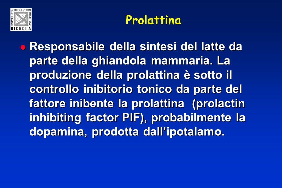 Prolattina Responsabile della sintesi del latte da parte della ghiandola mammaria. La produzione della prolattina è sotto il controllo inibitorio toni