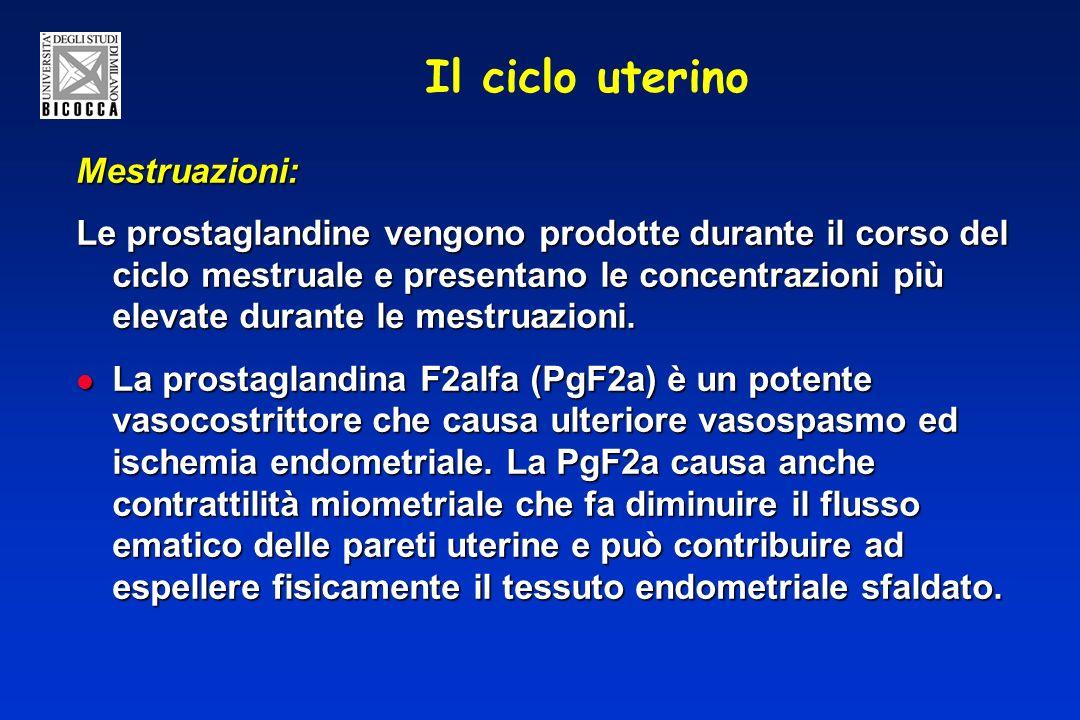 Il ciclo uterino Mestruazioni: Le prostaglandine vengono prodotte durante il corso del ciclo mestruale e presentano le concentrazioni più elevate dura