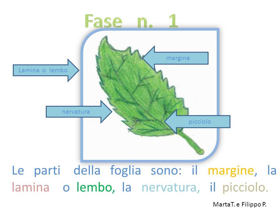 Le parti della foglia sono: il margine, la lamina o lembo, la nervatura, il picciolo. Lamina o lembo picciolo margine nervatura o lo MartaT. e Filippo