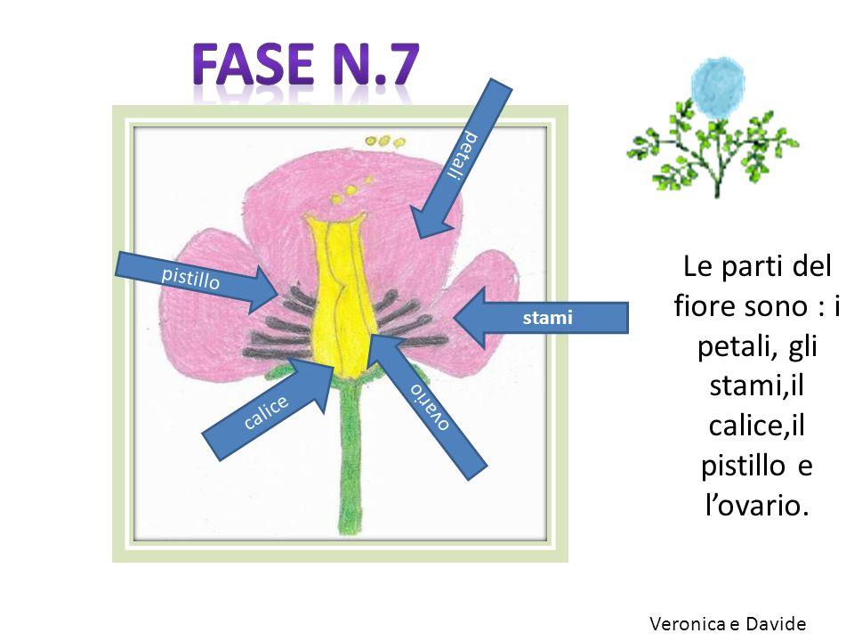 Le parti del fiore sono : i petali, gli stami,il calice,il pistillo e lovario. calice petali pistillo stami ovario Veronica e Davide
