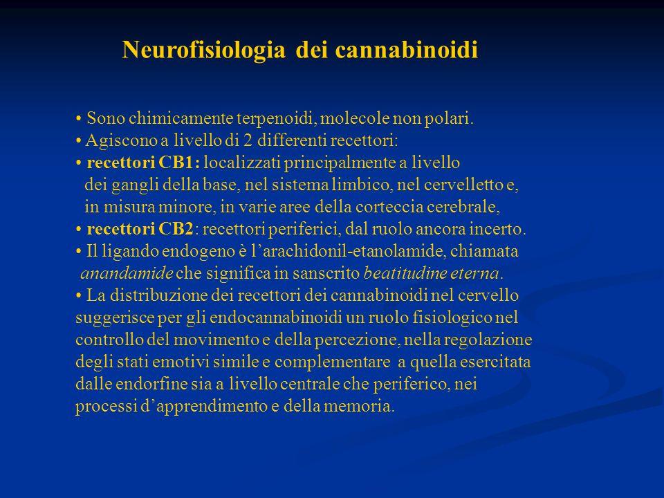 Neurofisiologia dei cannabinoidi Sono chimicamente terpenoidi, molecole non polari. Agiscono a livello di 2 differenti recettori: recettori CB1: local
