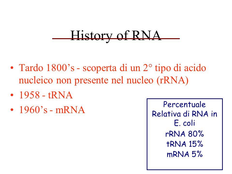 History of RNA Tardo 1800s - scoperta di un 2° tipo di acido nucleico non presente nel nucleo (rRNA) 1958 - tRNA 1960s - mRNA Percentuale Relativa di