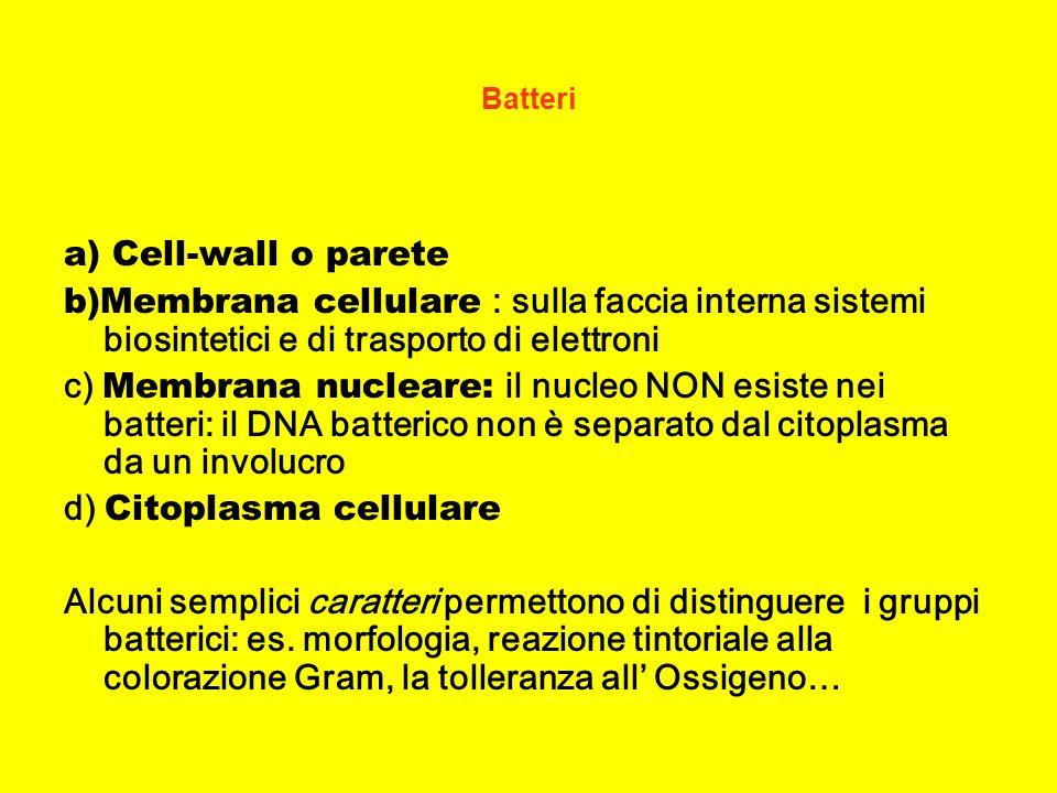 Classificazione Batteri COCCHI Gram +: streptococchi, stafilococchi..