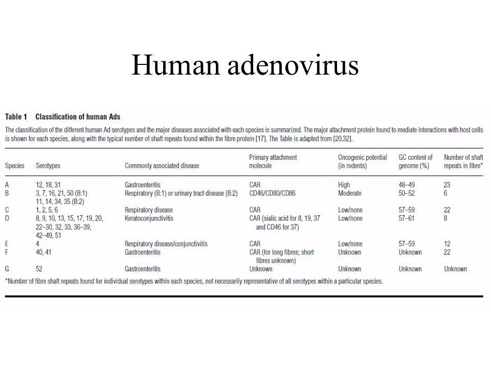 Human adenovirus